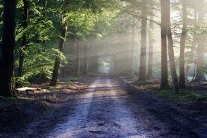 wandelen in het bos is heel gezond